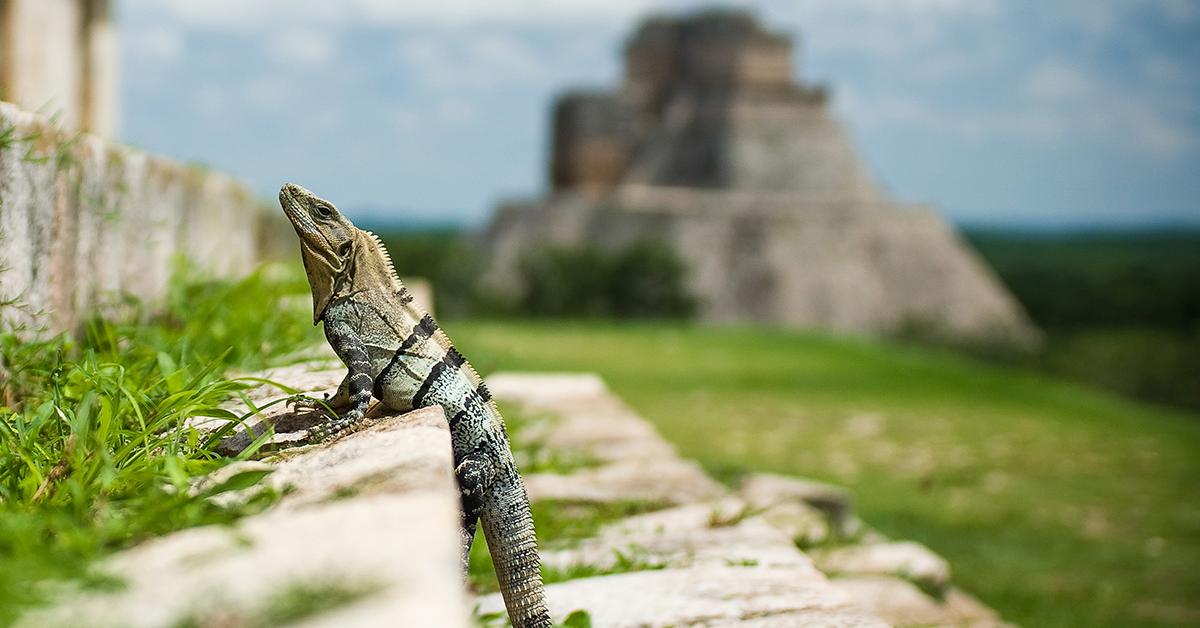 zonas arqueologicas mexico